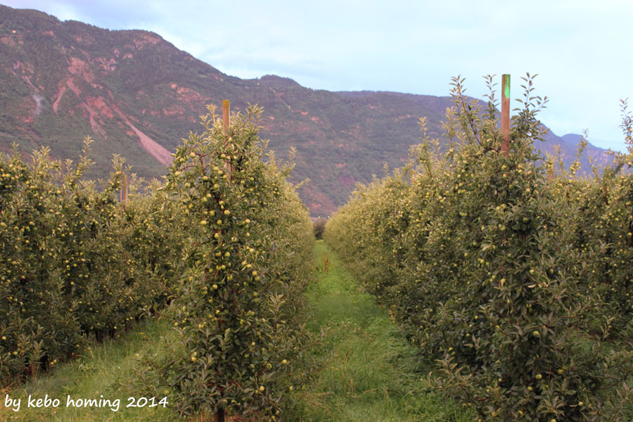 Südtiroler Apfel der Blick by kebo homing