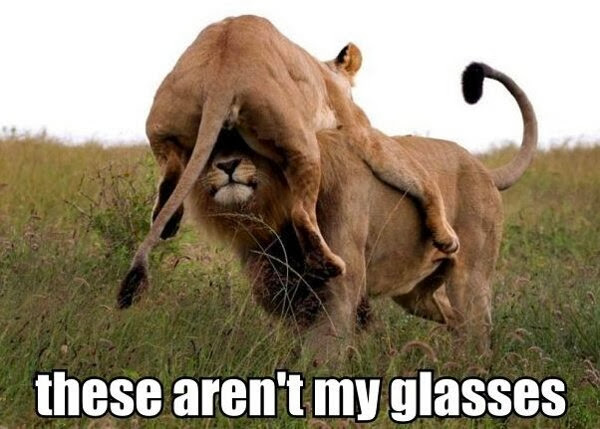 30 Funny animal captions - part 18 (30 pics), funny lion meme, these aren't my glasses meme