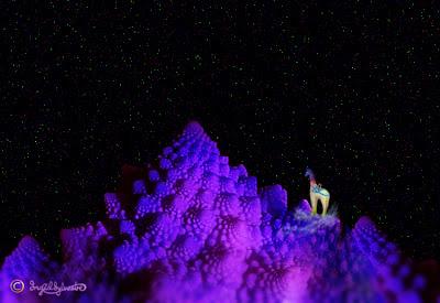 Nextra-terrestrial giraffe nexploring Camelopardalis Constellation - Ingrid Sylvestre - Stand Tall