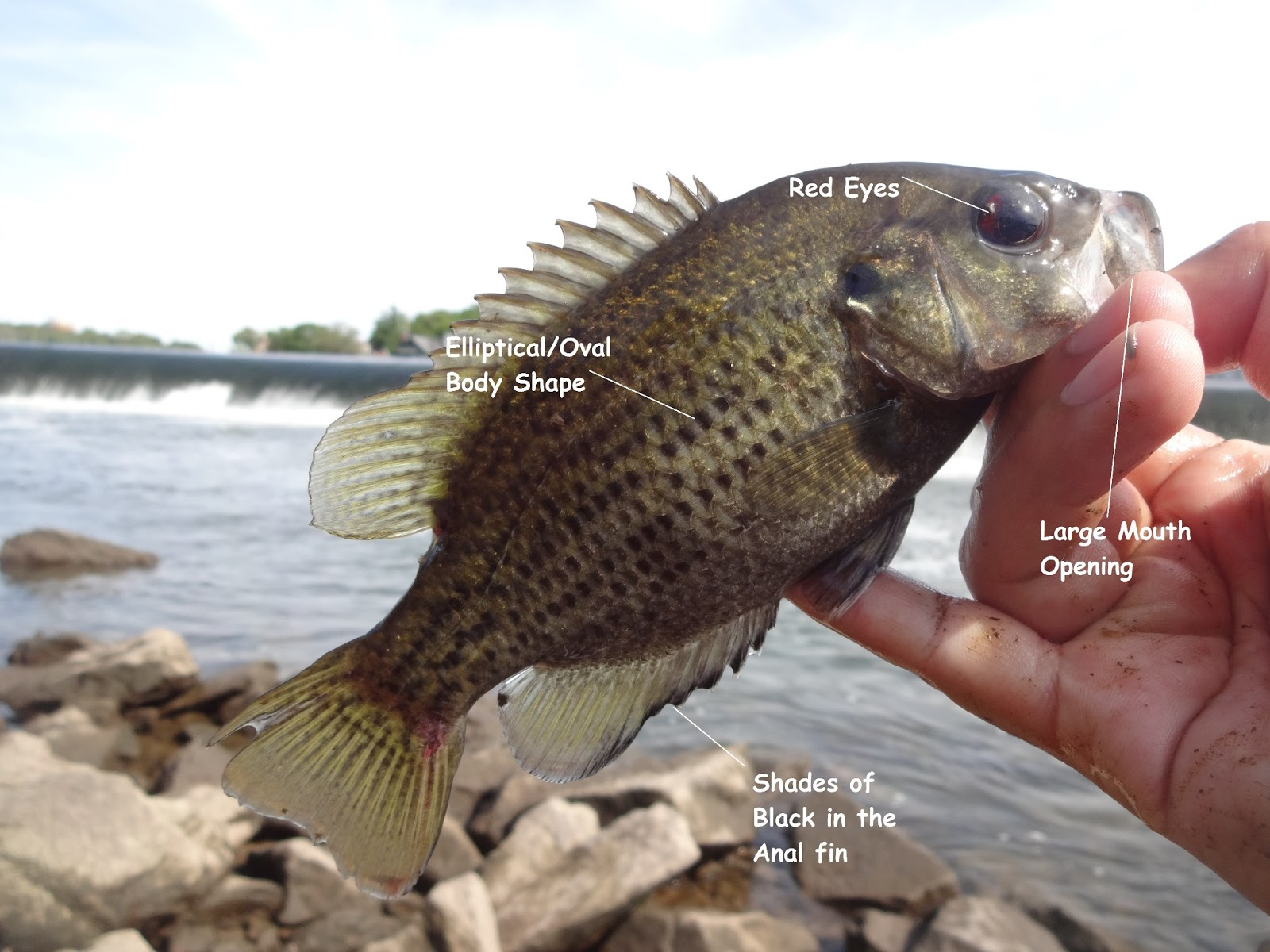 trout essay Disclaimer: free essays on college papers posted on this site were donated by anonymous users and are provided for informational use only the free college papers research paper (fly fishing.