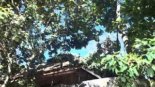 árvores, florestas