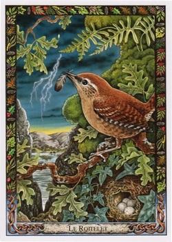 Magus Avium ~ The Magic Bird!