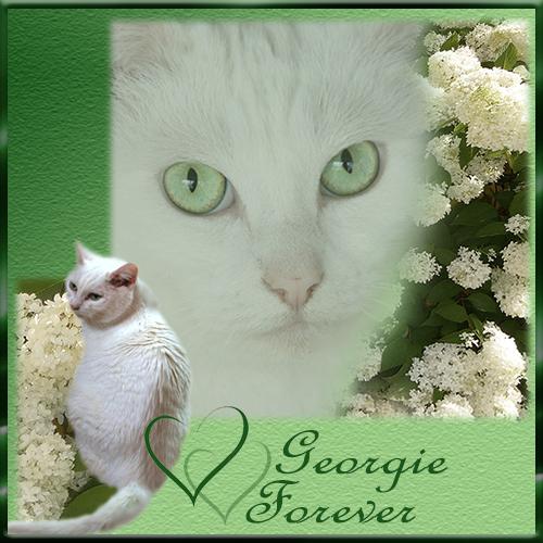 RIP GEORGIE