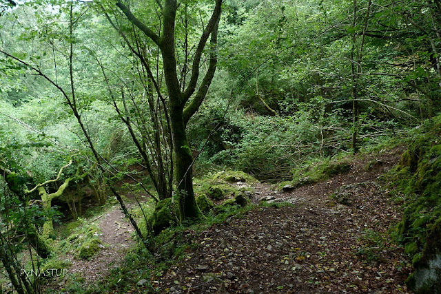 Hayedo de la Biescona  - Asturias