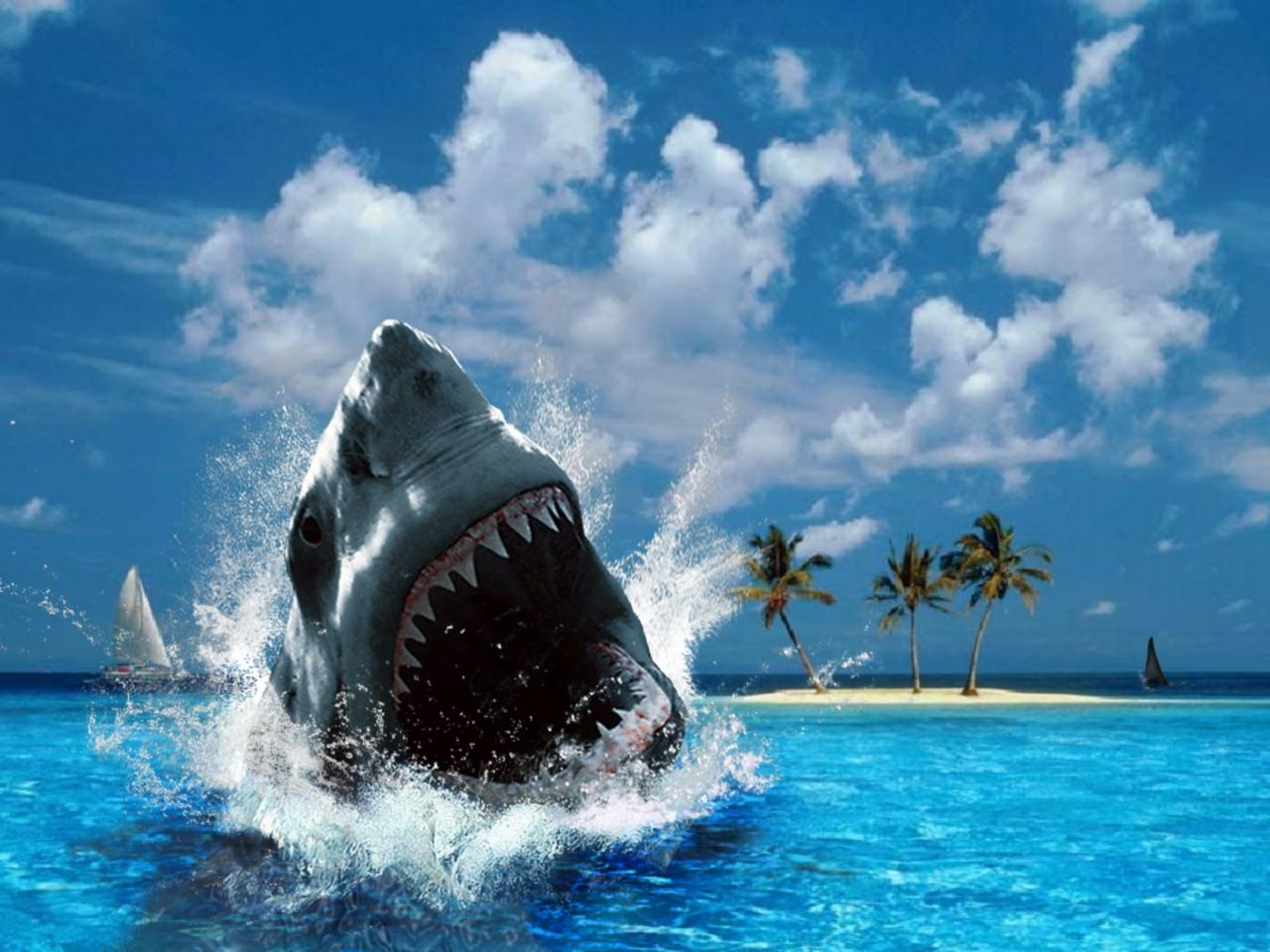 Shark wallpapers with sea backgrounds suitable for adventure s desktop