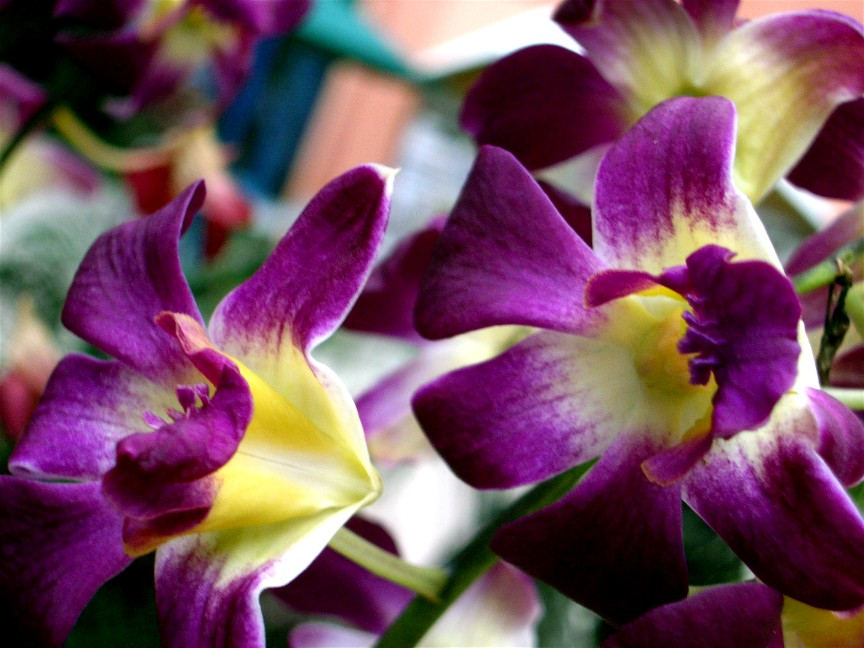 Top 10 Exotic Flowers For Gardening Part 2