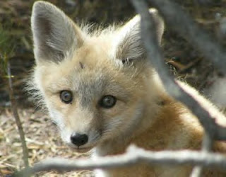 its the little foxes that spoil the vine