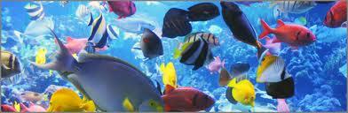 Aquariumworld Most Expensive Aquarium Fish