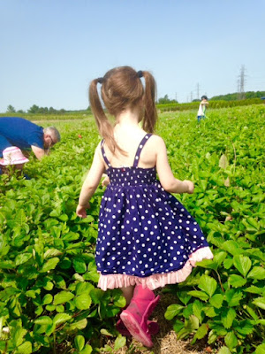 strawberry picking at Lindley's Farm