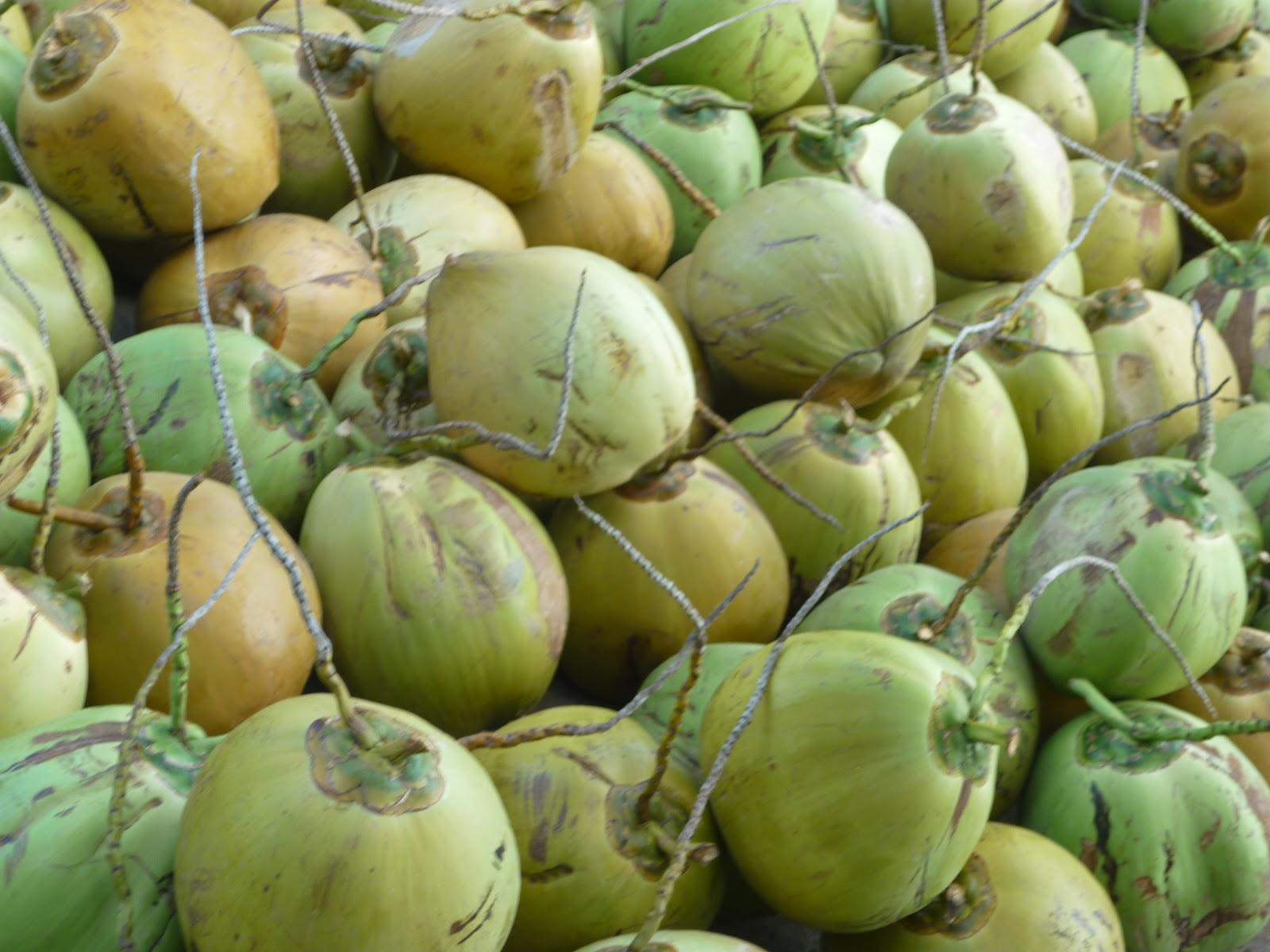 ... es,terutama bagi penjual kelapa muda yang terletak di jalan Majapahit