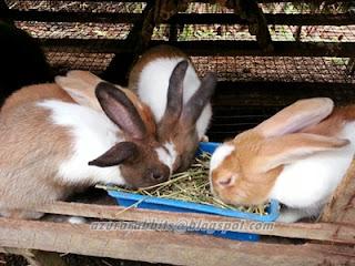 kiriman alfalfa hay dan timothy hay ke sabah dan sarawak