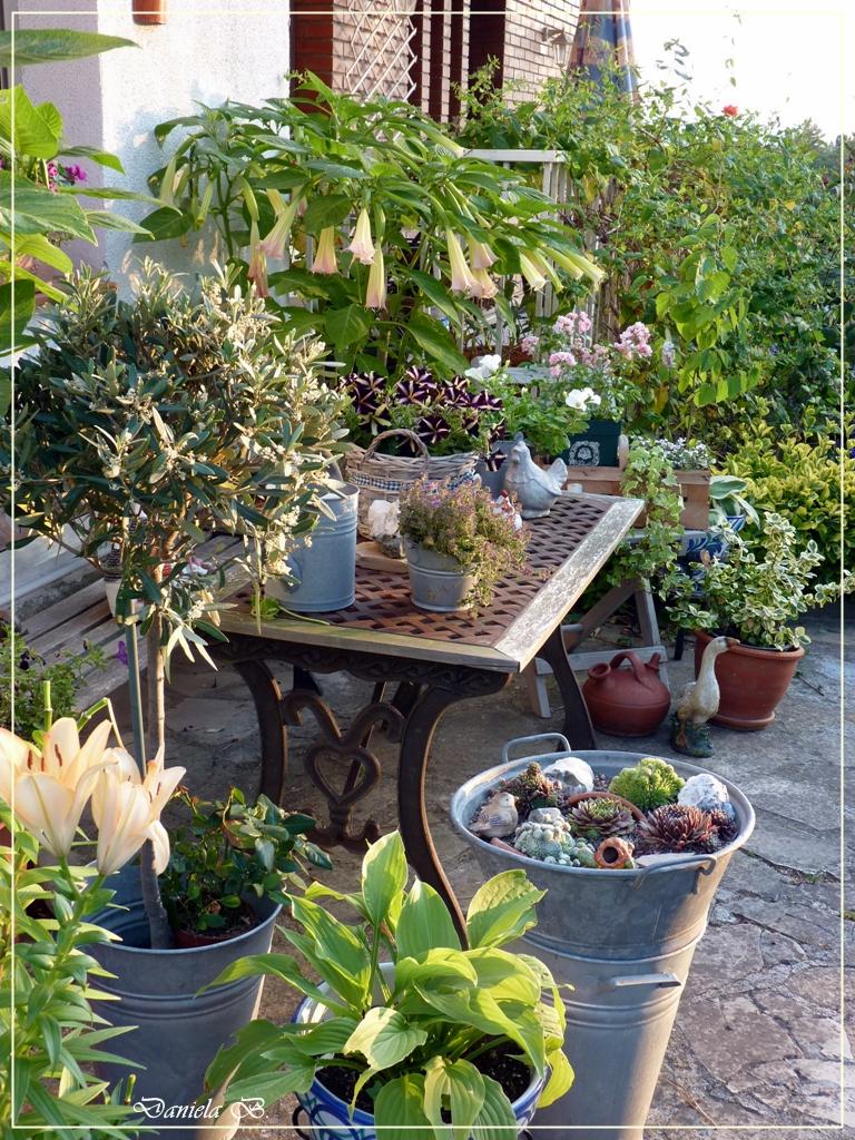 El mundo de daniela danielas welt mein garten in el - El mueble jardines ...