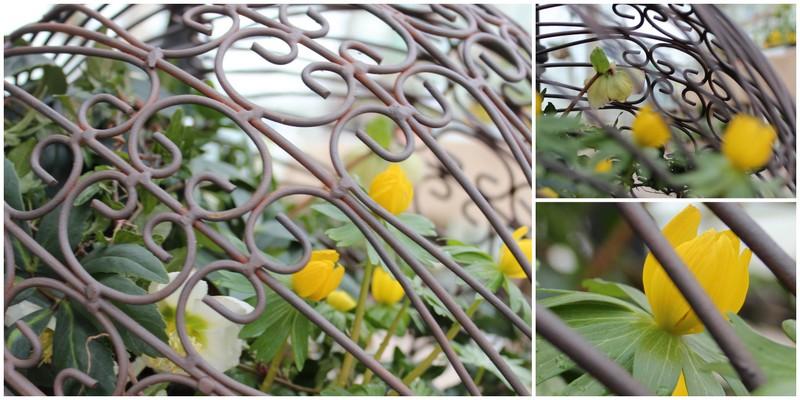 Havefolket: gartneriet spiren