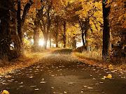 Bello camino cubierto de hojas de los arboles en el otoño. bello camino cubierto de hojas de los arboles en el otoã±o