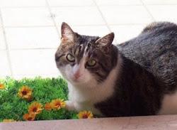 La mia gattina Minou