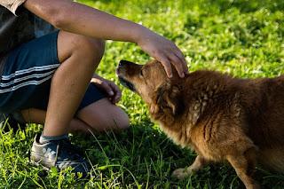 3 easy to teach dog tricks