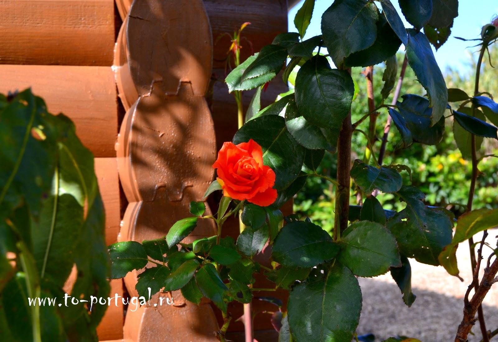 что растет в Португалии, цветы и деревья в Португалии