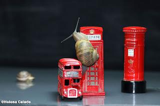 fotografia do caracol com miniaturas de icons ingleses