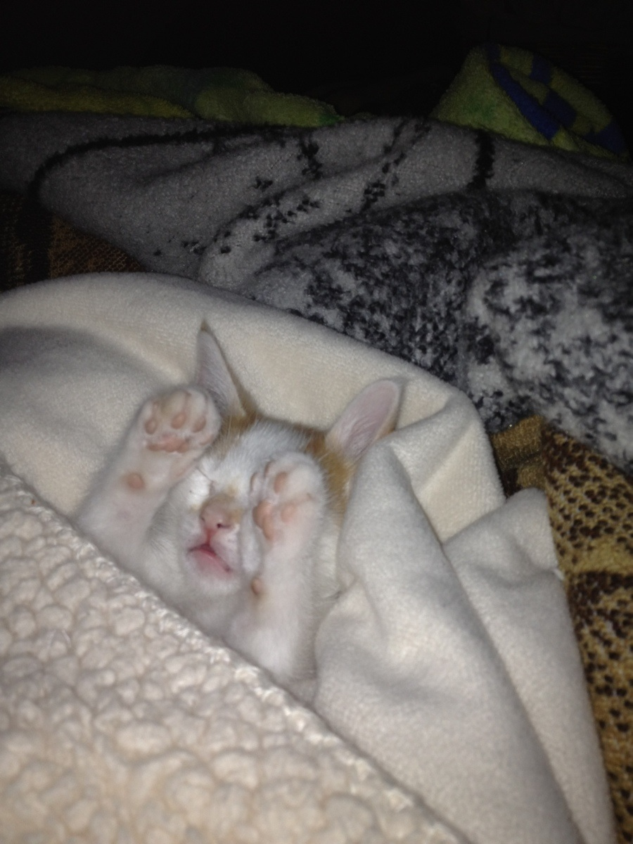 funny cats, cute cat pictures, cat sleeping with his paws on his face