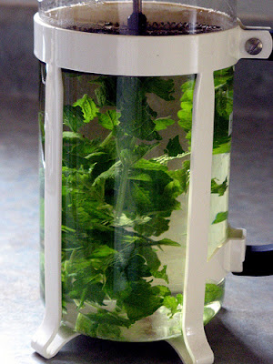 Lemon balm tisane