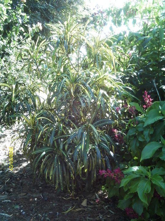 Plant Tours1 - Deerfield Beach Arboretum, Florida