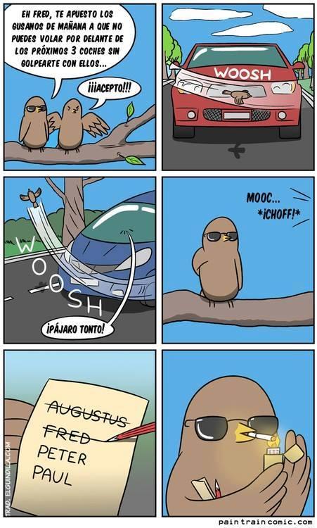 pajarito apostador pájaro volando cerca al carro