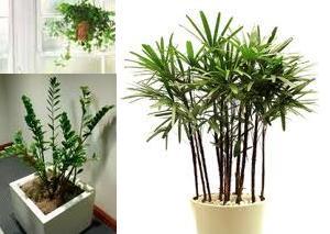 Rotina dom stica plantas de interiores for Plantas de interiores
