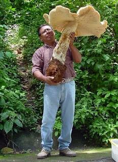 Chiapas, Mexico Farmer