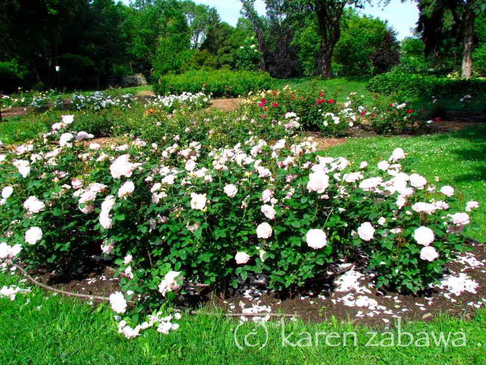 Brueckner Rhododendron Gardens: Rose Garden Design Legend ...
