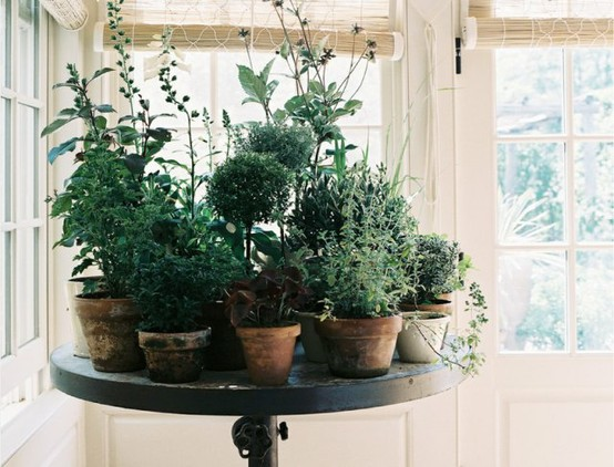 Badkamer Plant : Potted-Herb-Plants
