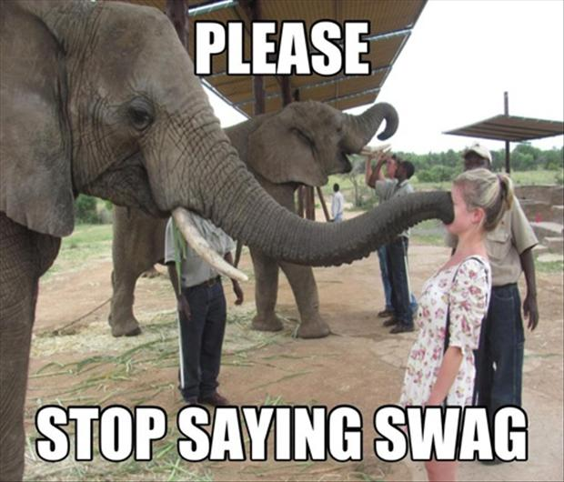 funny elephants pictures funny and cute animals