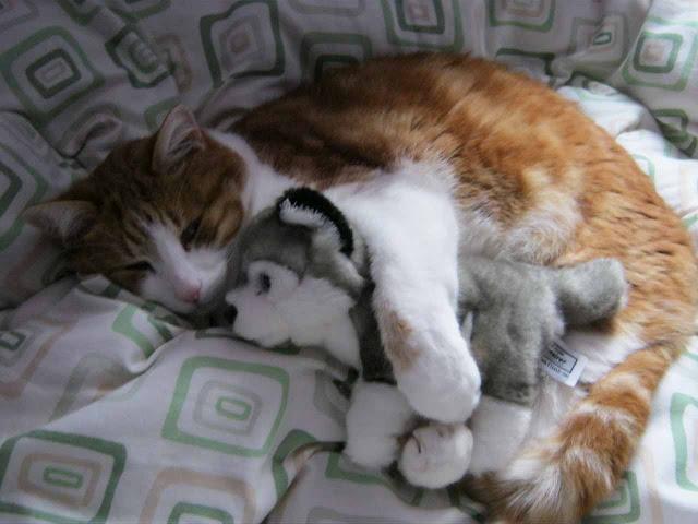 Foto Kucing Lucu Imut dan Menggemaskan 36