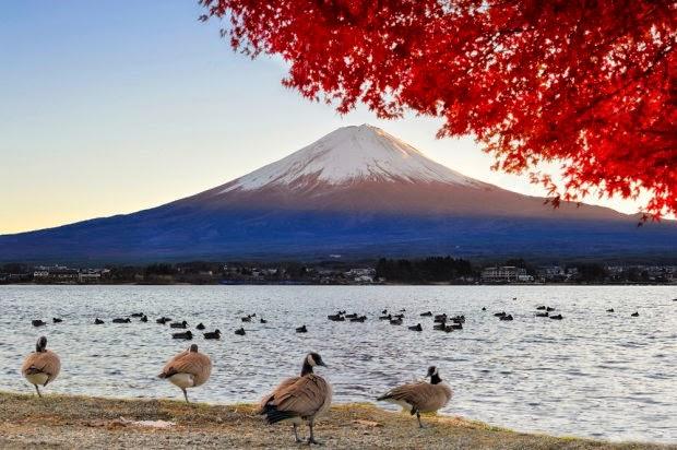 podróż do japonii, Baśnie na warsztacie, dzieci i podróże, Klub latających podróżników, Mateusz Świstak, MEK, Muzeum Etnograficzne, Warsztaty dla dzieci, fudżi, koala