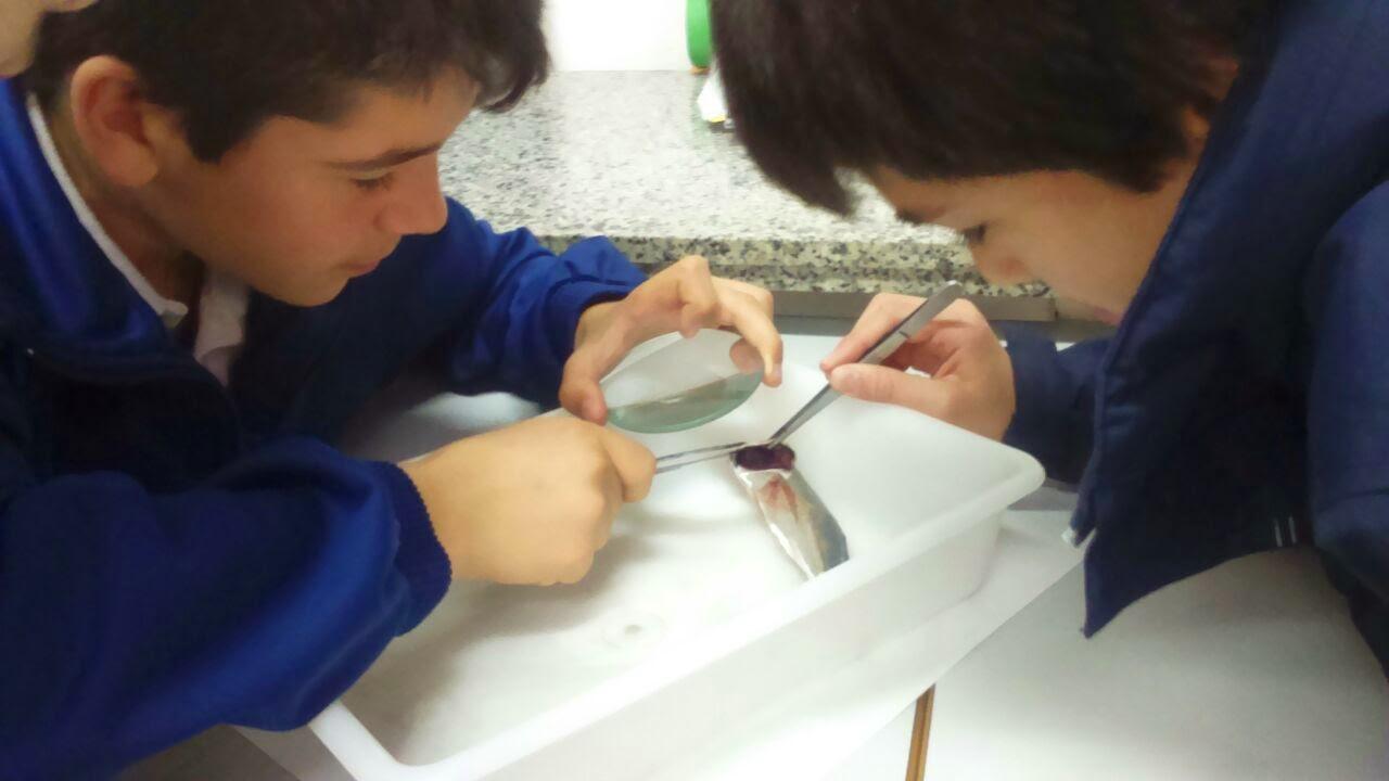 Prácticas en el Laboratorio Mendel: anatomía del pez ~ Colegio ...