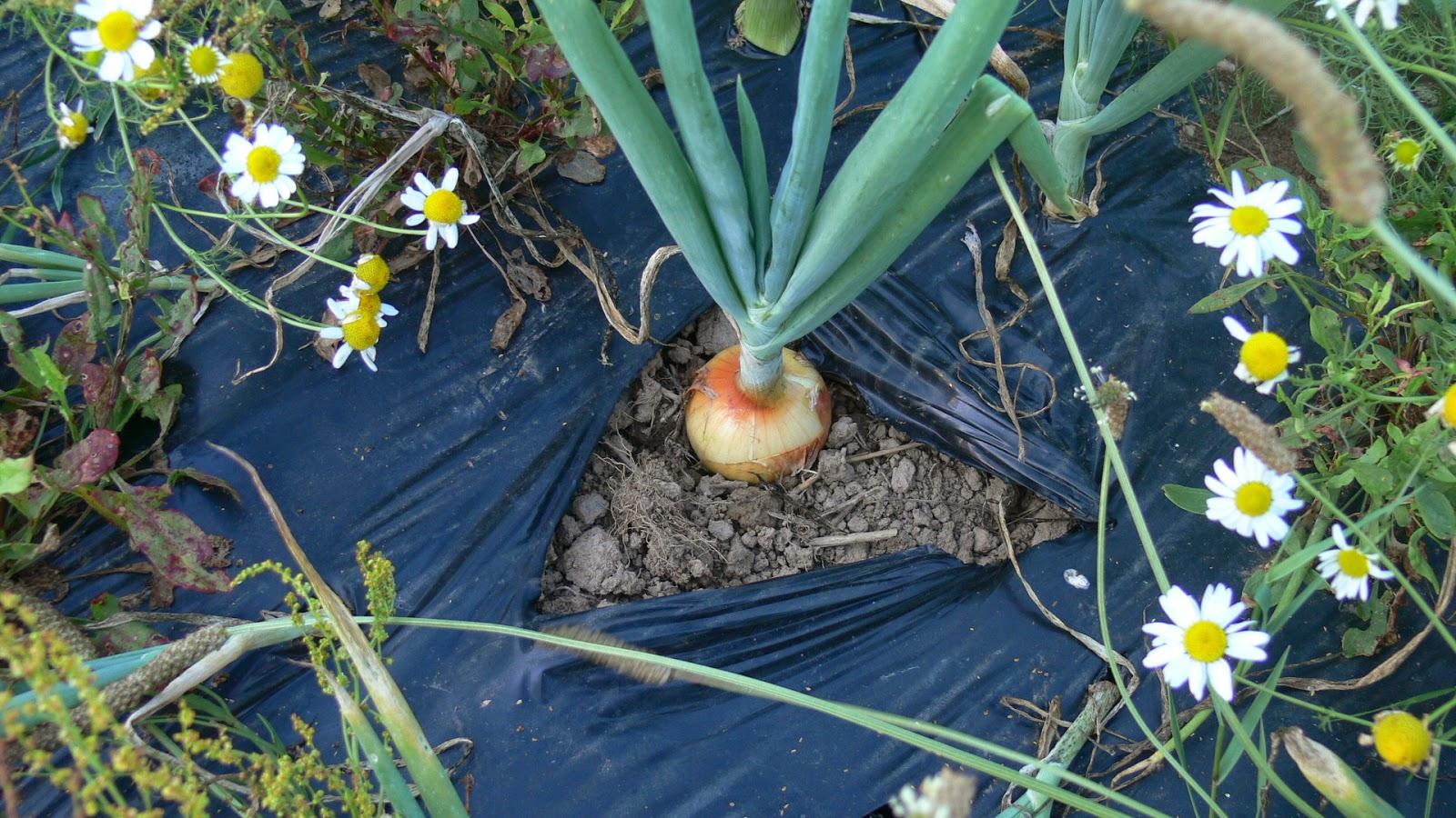 légumes qu on récolte au primptemps