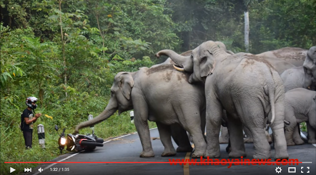 A video shot at Khao Yai National Park went viral after it captured a herd of elephants attacking a biker and then sparing his life.   The video of the last Sunday incident has generated nearly 2 million views on YouTube.