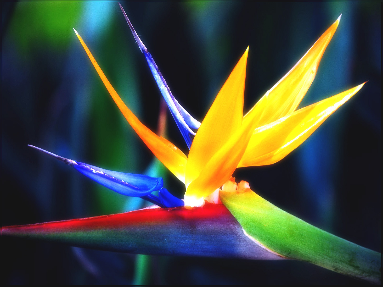 Flower Homes: Bird of Paradise Flowers