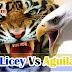 Cancelan juegos Tigres del Licey Vs Águilas Cibaeñas en New York