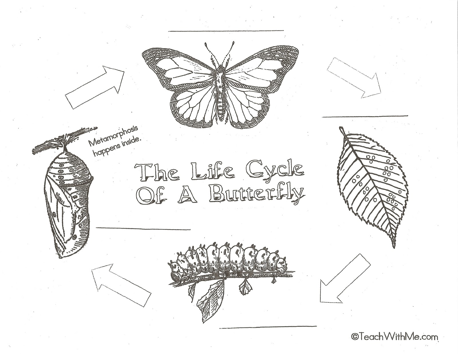 Coloring pages of butterfly stages of life - Butterfly Metamorphosis Coloring Pages Life Cycle Of Butterfly Worksheet 1600x1237 Free Butterfly Coloring Pages Life