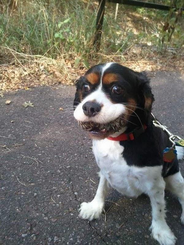 Cute dogs - part 11 (50 pics), dog bites pine cone