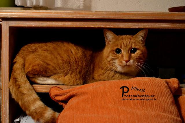 Rote Katze Mimi im Regal