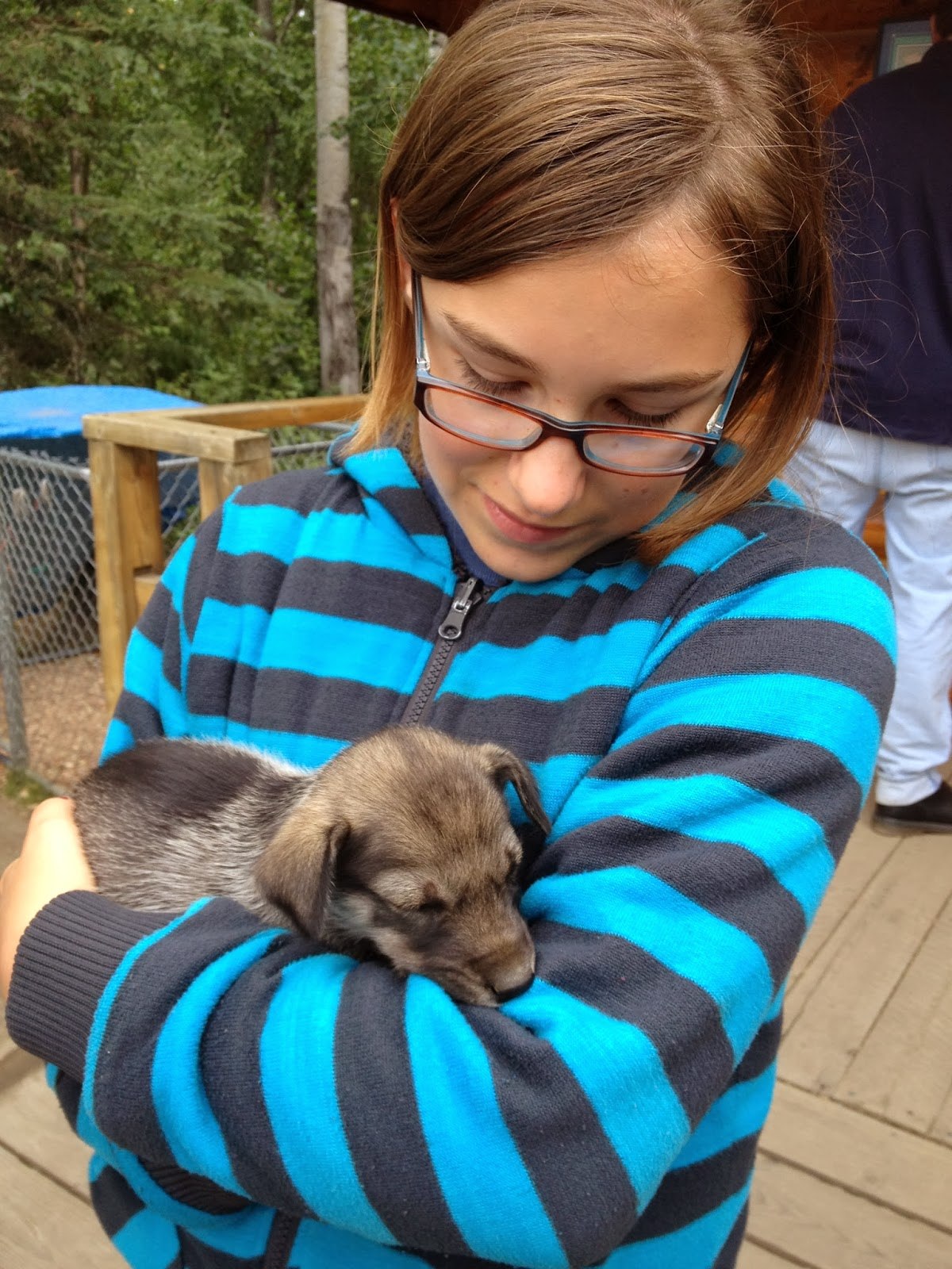 Sled dog pups at Iditarod Race Headquarters