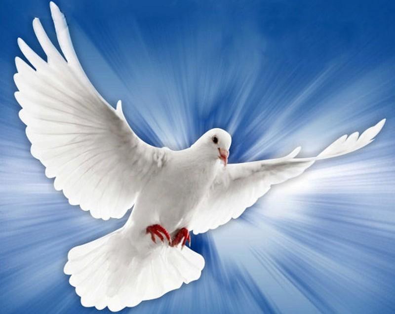 As Palavras de Deus são espírito e vida!