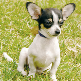 Small Dog Breeds That Are Calm And Easy To Train