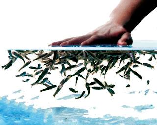 manicura con peces, pedicura con peces