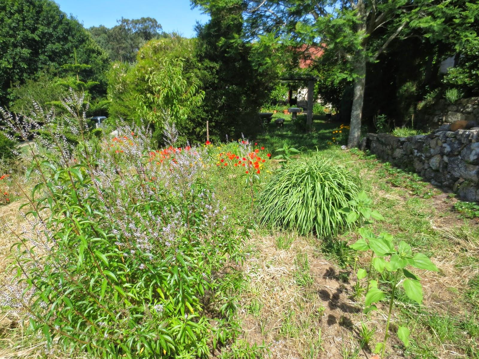 Color salud arteterapia el huerto de plantas aromaticas - Plantas de huerto ...