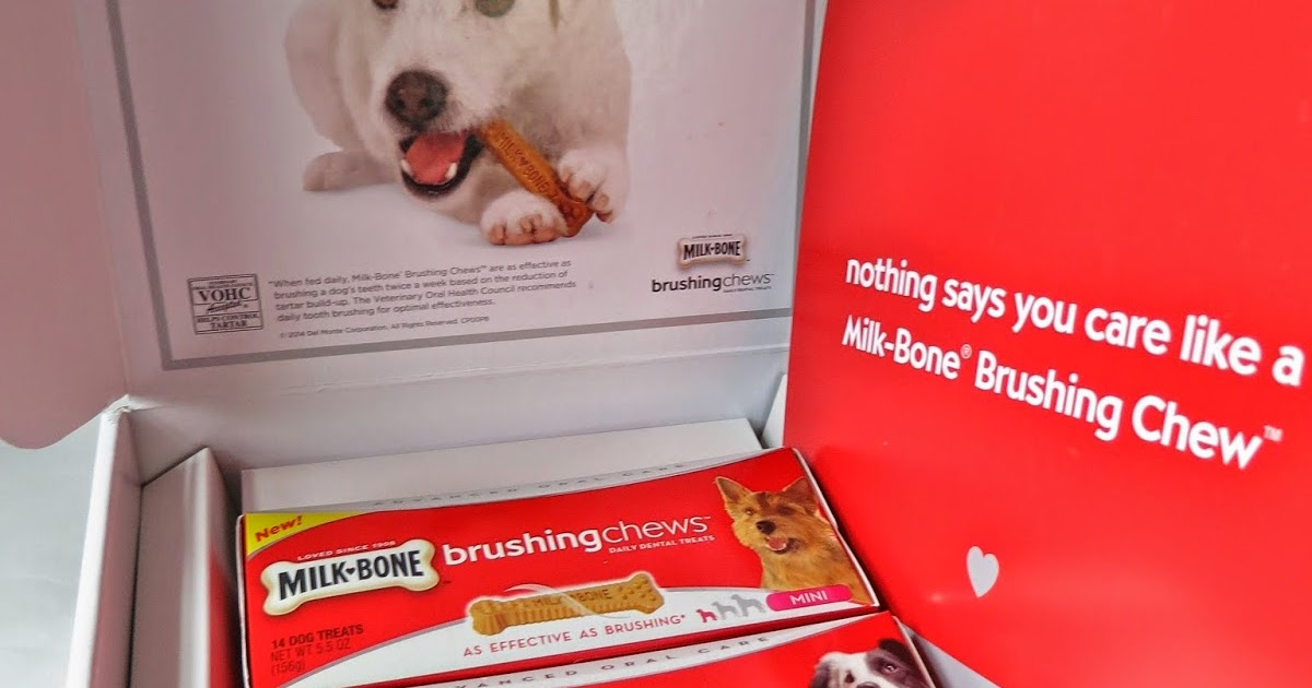 Reasons To Brush A Dog S Teeth