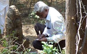 நாட்டாணி 2015 Nattani