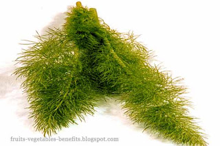 benefits_of_eating fennel_fruits-vegetables-benefits.blogspot.com(6)