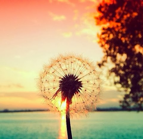 Ik hou van de zon ☼